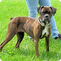 Adopt A Pet :: Margret - Batavia, OH