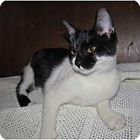 Adopt A Pet :: Mischa - New Egypt, NJ