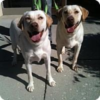 Adopt A Pet :: Kimber and Kane - Foster, RI