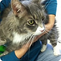 Adopt A Pet :: Sebastian - Riverhead, NY