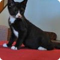 Adopt A Pet :: Dinghy - Port Republic, MD