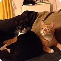 Adopt A Pet :: RitzyandKellar - Pittstown, NJ