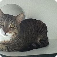 Adopt A Pet :: Ivon - Hamilton, ON