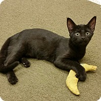 Adopt A Pet :: Presley - Phoenix, AZ