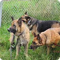 Adopt A Pet :: Thor Sky and Nova - Tillamook, OR