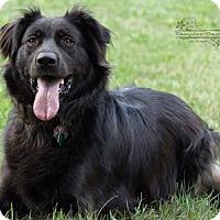 Adopt A Pet :: Taytum - Pierrefonds, QC
