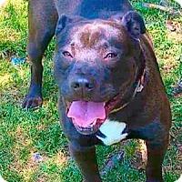 Adopt A Pet :: Duke - Sioux Falls, SD