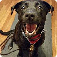 Adopt A Pet :: Marla - Acushnet, MA