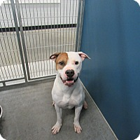 Adopt A Pet :: Scream (HW Neg) - Henderson, NC