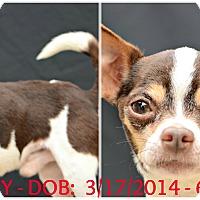 Adopt A Pet :: Buddy - Siler City, NC