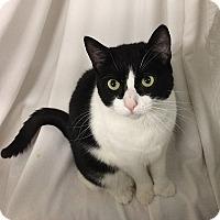 Adopt A Pet :: Bootsie - N. Billerica, MA