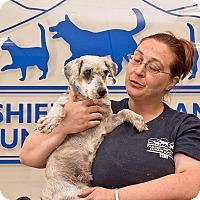 Adopt A Pet :: Ryan - Cashiers, NC