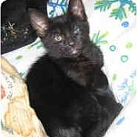 Adopt A Pet :: Snowball #4 - Davis, CA