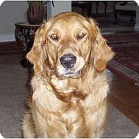 Adopt A Pet :: Hannah - Denver, CO