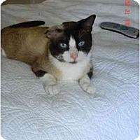 Adopt A Pet :: Buddy - Riverside, RI
