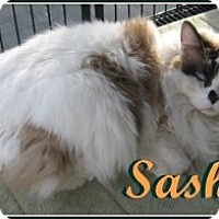 Adopt A Pet :: Sasha - Galloway, NJ