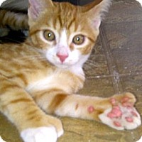 Adopt A Pet :: Winston - Escondido, CA