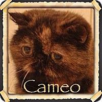 Adopt A Pet :: Cameo - Beverly Hills, CA