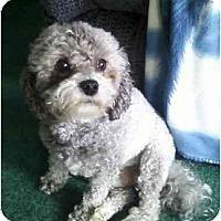Adopt A Pet :: Maxwell - Conroe, TX