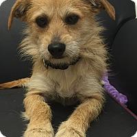 Adopt A Pet :: Felix - Mission Viejo, CA