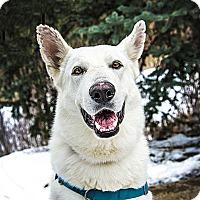 Adopt A Pet :: Titan - Denver, CO