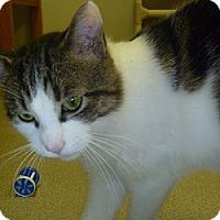 Adopt A Pet :: Mulligan - Hamburg, NY