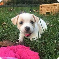 Adopt A Pet :: Boo ! - Marlton, NJ