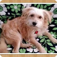 Adopt A Pet :: Indian Mills NJ - Benji - New Jersey, NJ