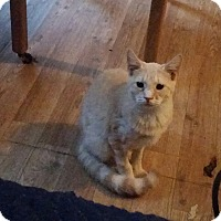 Adopt A Pet :: Penny - Bronson, FL