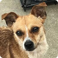 Adopt A Pet :: Ruby 2 - San Marcos, CA