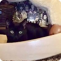 Adopt A Pet :: Cadence - Baltimore, MD