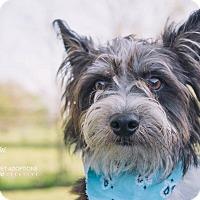Adopt A Pet :: Kai - San Leon, TX