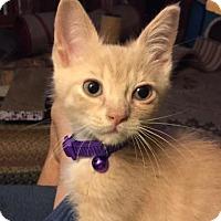 Adopt A Pet :: Ming - Oviedo, FL
