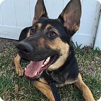 Adopt A Pet :: Yaro - Ormond Beach, FL