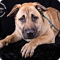 Adopt A Pet :: Chita - Lodi, CA