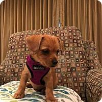 Adopt A Pet :: Dixie - Hockessin, DE