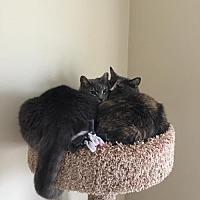 Adopt A Pet :: Jade and Johanna - Budd Lake, NJ
