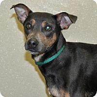 Adopt A Pet :: Arwen - Port Washington, NY