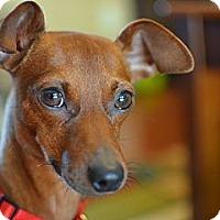 Adopt A Pet :: Lenny - Nashville, TN