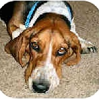 Adopt A Pet :: May - Phoenix, AZ