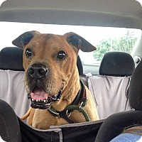 Adopt A Pet :: Woody ~ Adoption Pending - Youngstown, OH