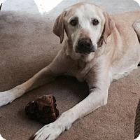 Adopt A Pet :: Woodrow - Cumming, GA