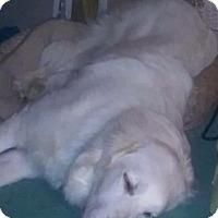 Adopt A Pet :: Bella ADOPTED - Bloomington, IL