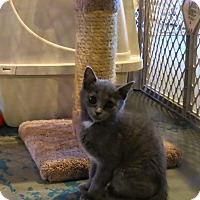 Adopt A Pet :: Oopsy Daisy - Geneseo, IL