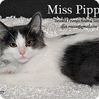 Adopt A Pet :: Miss Pippin - Ortonville, MI