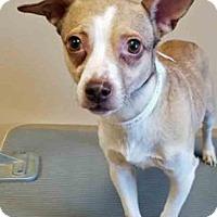 Adopt A Pet :: Kyle - Oswego, IL