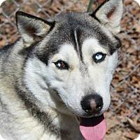 Adopt A Pet :: Balto - Harrisonburg, VA