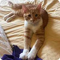 Adopt A Pet :: Jory - Mississauga, Ontario, ON