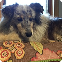 Adopt A Pet :: Franny - Circle Pines, MN