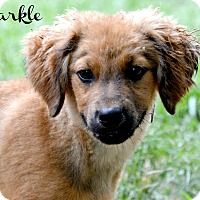 Adopt A Pet :: Markle~adopted! - Glastonbury, CT